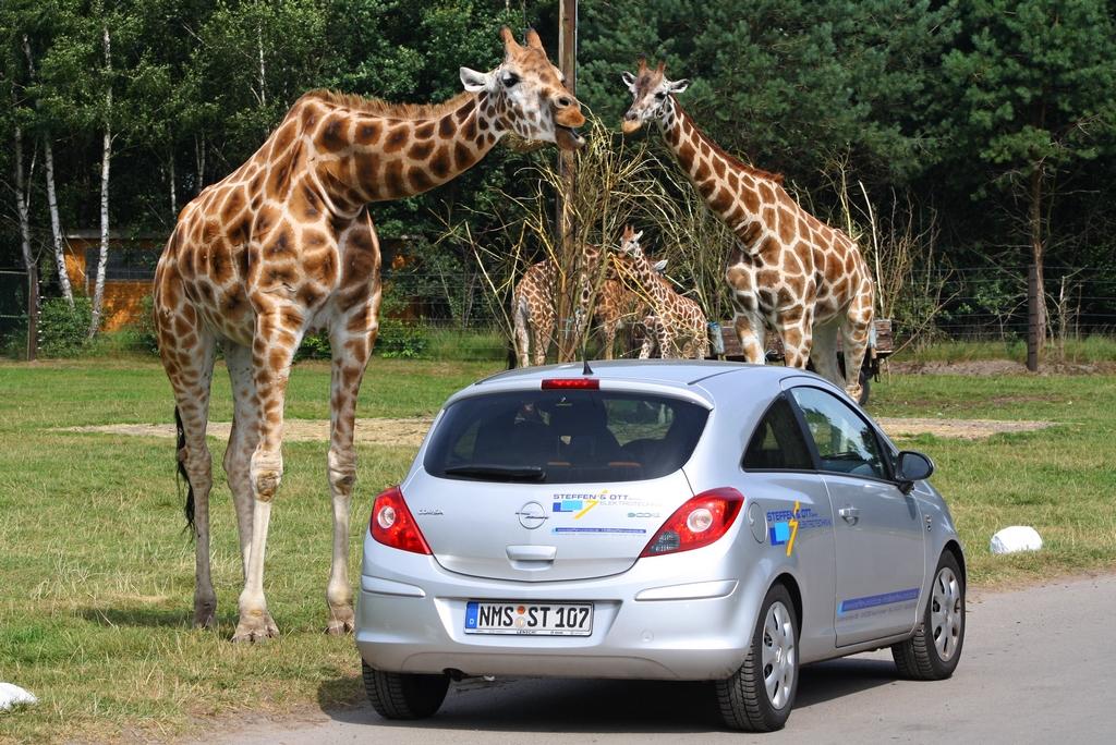 Serengeti parkas